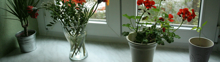 Kitchen Windowsill Decor Ideas For Spring Time Blindtrack